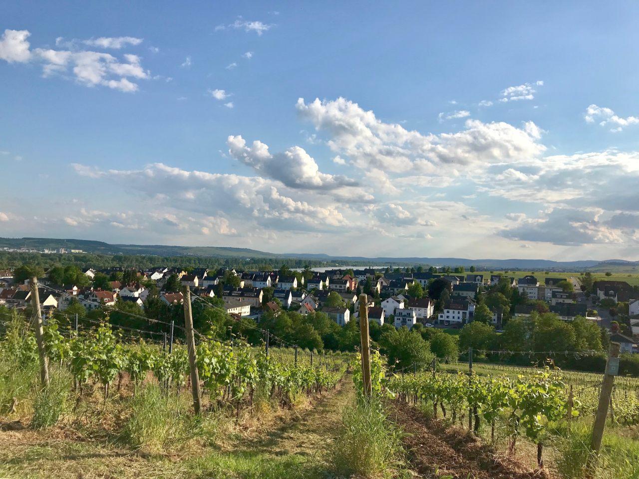 Blick herunter nach Hattenheim