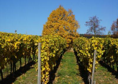 Weinwanderungen Opera et Cetera (8)